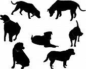 Black Labrador silhouettes..