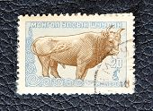 Mongolia - Circa 1958: A Stamp Printed In The Mongolia, Shows A Big Horned Bull, Circa 1958