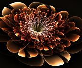 Beautiful Beige Flower On Black Background. Computer Generated Graphics.