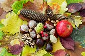 Apple, Autumn Leaves, Horse Chestnut, Pine Cones, Rosehip And Nuts