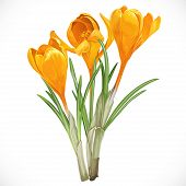I repainted purple flowers in yellow isolated on white background