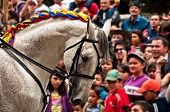 Horse At Parade