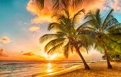 stock photo of beauty nature  - Beautiful sunset over the sea with a view at palms on the white beach on a Caribbean island of Barbados - JPG
