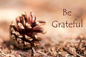 image of humility  - A Fir Cone in a brown Autumnal Background with the Words Be Grateful