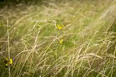 Close Up Of Grass For Backgrounds