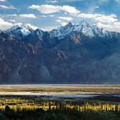 Nubra Valley - Indian Himalayas - Ladakh - Jammu And Kashmir - India
