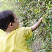 Child Picking Wild Berries