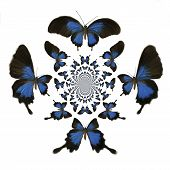 image of mustering  - Digital painted Illustration of Butterflies in kaleidoscopic Pattern - JPG