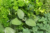 Closeup Of Variety Fresh Herbs