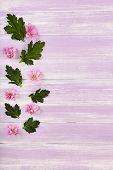 stock photo of chrysanthemum  - beautiful chrysanthemum flowers on purple wooden background - JPG