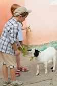 Children fed goat at the zoo
