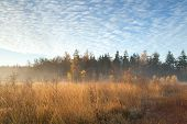 Misty Sunrise In Autumn Forest
