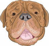 Vector Bordeaux Mastiff