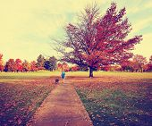 a woman walking with her pit bull in a park on an autumn day toned with a retro vintage instagram filter