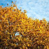 Autumn Trees Background.