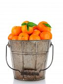 A, antique metal bucket full of Clementine Mandarin Oranges. Vertical format over a white background