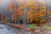 Colorful trees by the river in late autumn time