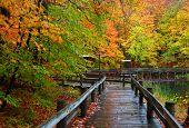 Wet board walk in autumn time