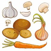 stock photo of carrot  - Vector color illustration of onion carrot potatoes garlic mushrooms - JPG