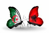 Two Butterflies With Flags On Wings As Symbol Of Relations Algeria And Albania