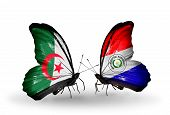 Two Butterflies With Flags On Wings As Symbol Of Relations Algeria And Paraguay