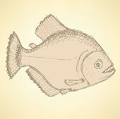 Sketch Dangeous Piranha In Vintage Style