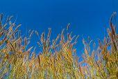 Gramineae grass flowers