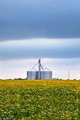 stock photo of silos  - Agriculture industry with soybean fields and silo on cloudy day in Midwest USA - JPG