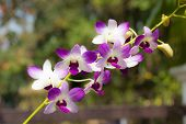 image of epiphyte  - Orchids occur worldwide, especially as epiphytes in tropical forests, 