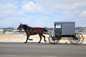 stock photo of carriage horse  - An Amish Carriage travels in snow covered rural Lancaster County - JPG