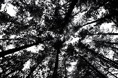 Bare Branches Of Trees In Black And White