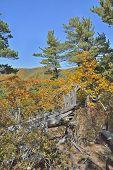 Autumn Taiga 28