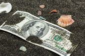 image of sand dollar  - hundred dollars in the black sand with shells and pebbles - JPG