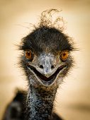 Portrait Of A Smiling  Ostrich
