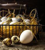 Basket of freshly laid  eggs lying on straw in the barn