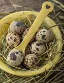 Spotted Quail Eggs in Bowl