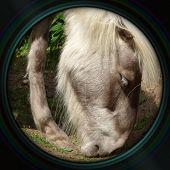 Pony Head Closeup In Objective Lens