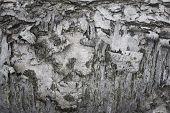 Bark Tree Abstract Detail Photo