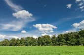 image of alfalfa  - Green alfalfa field under a blue sky with white clouds - JPG