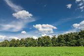foto of alfalfa  - Green alfalfa field under a blue sky with white clouds - JPG