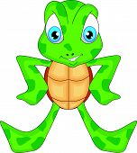 picture of terrapin turtle  - vector illustration of cute sea turtle cartoon - JPG