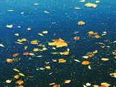 Autumn Leaves On Water