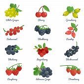 foto of blackberries  - Berries flat icons set with grape cherry gooseberry blackberry isolated vector illustration - JPG