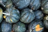 picture of acorn  - fresh green acorn squash at the market place - JPG