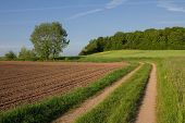 foto of edging  - country lane through farmland ploughed field and edge of the woods - JPG
