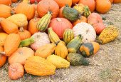 stock photo of gourds  - giant bumpy gourd and pumpkin at the market place - JPG