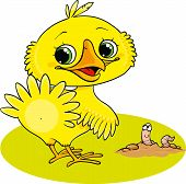 picture of worm  - a small yellow chicken stands near the worm - JPG
