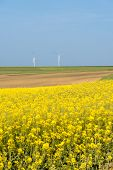 foto of rape  - Clean energy in the spring rape flowers were yellowing the fields with wind farm in Poland - JPG