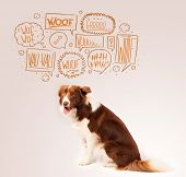 stock photo of border collie  - Cute brown and white border collie with barking speech bubbles above his head - JPG