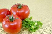 image of plum tomato  - Raw tomatos on a covered table with fresh parsley - JPG